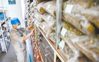 通辽市:蒙医药产业转型升级蓄势而发