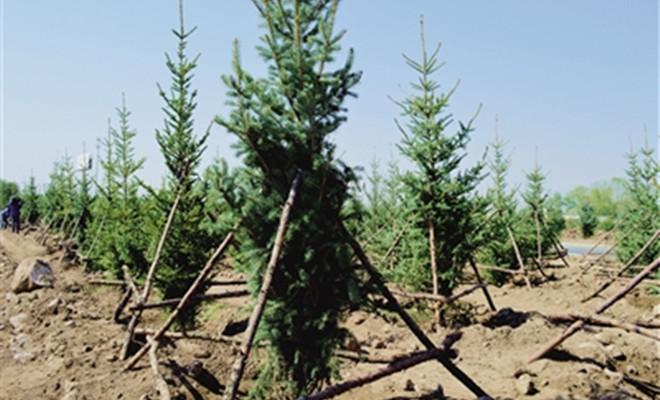 大青山前坡生态建设工程已完成绿化面积约7.1万亩