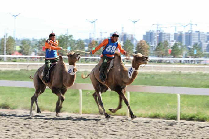 奔跑吧 骆驼!