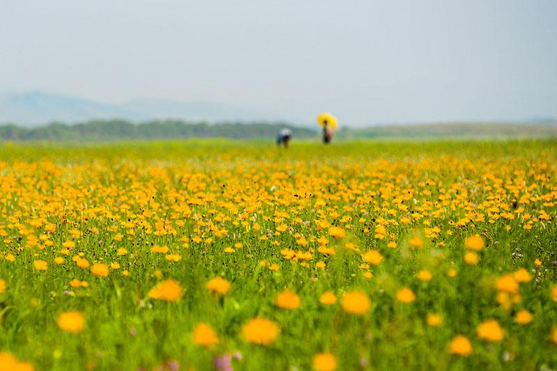 请来金莲川草原赏花
