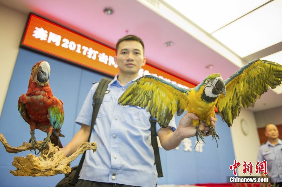 广东警方专项行动收缴野生动物万余只