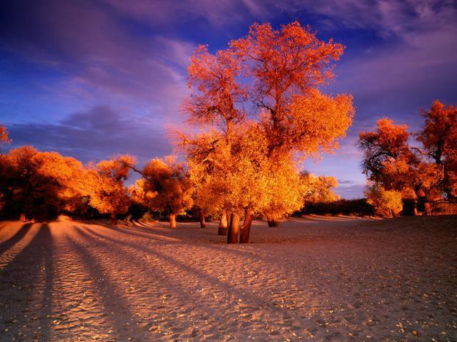秋天 一年中最五彩缤纷的季节