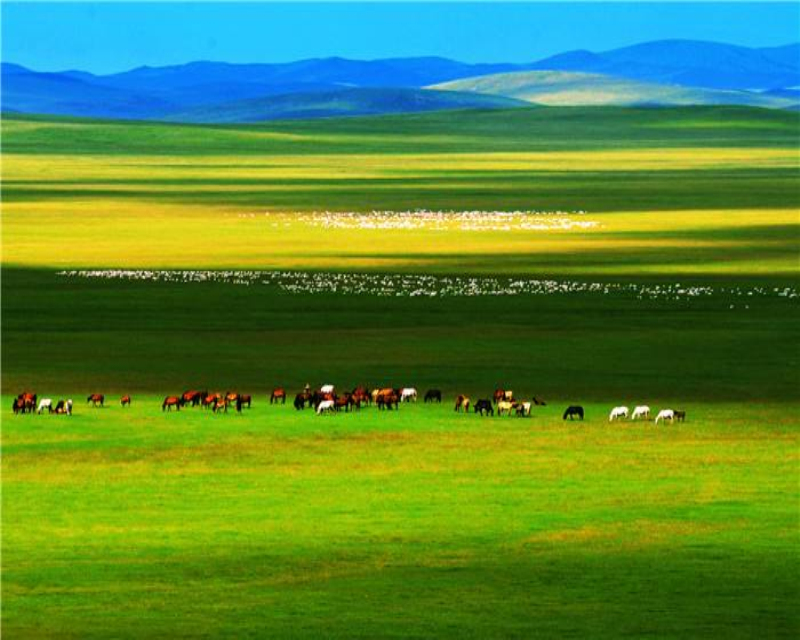 去锡林郭勒草原放风