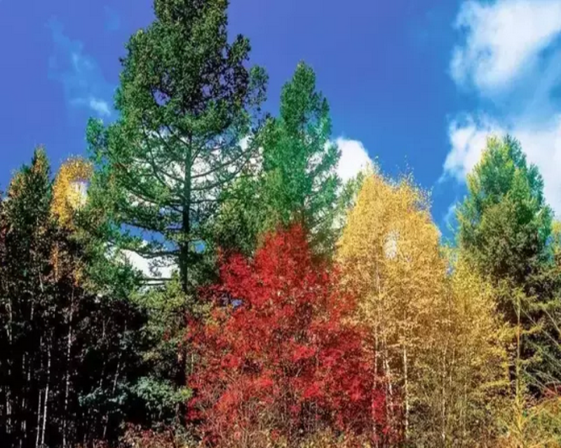 色彩斑斓的阿尔山 迷人之景