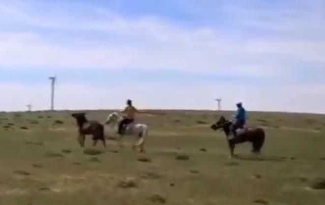 内蒙古巴彦淖尔乌拉特草原,套马、戴笼头,对马进行打马印、打马鬃等活动,