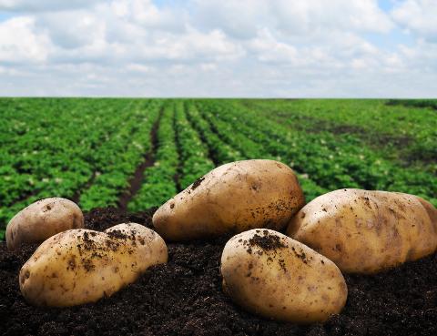 武川县马铃薯产业协会成立