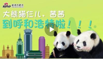 #大熊猫来了# 直播!大熊猫茜茜和大熊猫仨儿抵达呼和浩特!