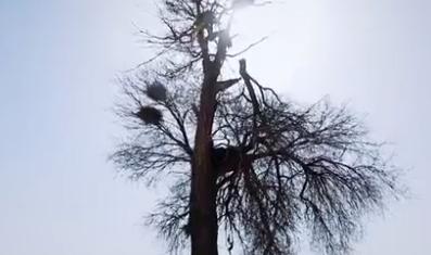 一颗具有300多年历史的古树,在腾格里沙漠孤独成长,懂得坚守,向平凡致敬