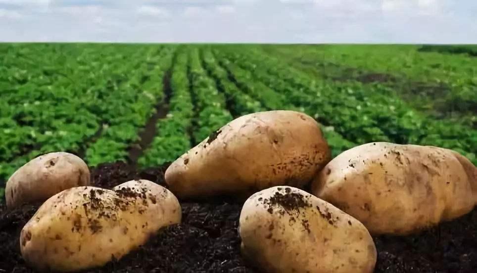 中国薯都·乌兰察布第八届马铃薯展洽会签约协议金额3.27亿元