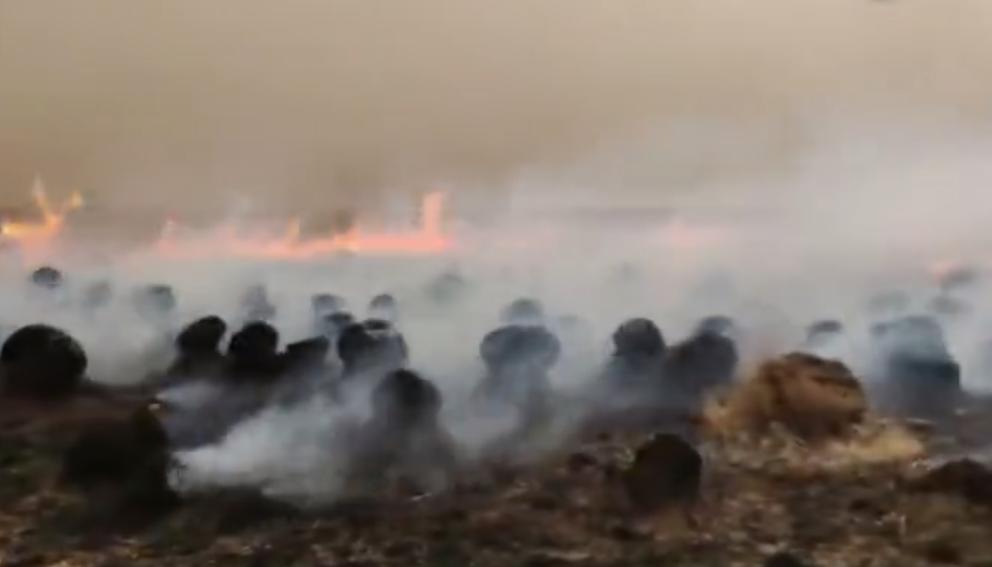 4月20日,呼伦贝尔一消防队在赶往草原火灾救援的路上被海拉尔北收费站拦下,引网友热议