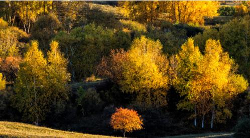 请在秋天来呼伦贝尔寻梦