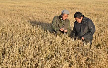 托县大力推进农业供给侧结构改革成效显著