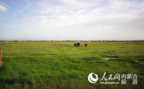 呼和塔拉万亩城市草原。王慧摄