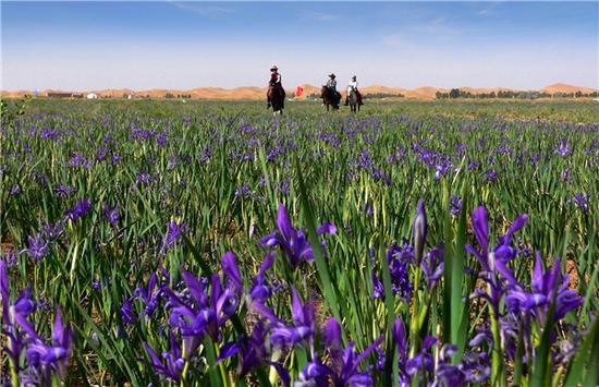 内蒙古花期时刻表为您奉上,跟着花期去旅行吧!