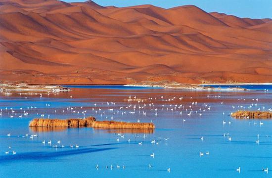 爱上内蒙古 丨 内蒙古黄河旅游精品线路——阿拉善盟