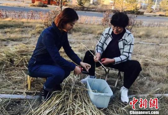 杨丽丽(左一)在田间修剪莜麦。受访者供图