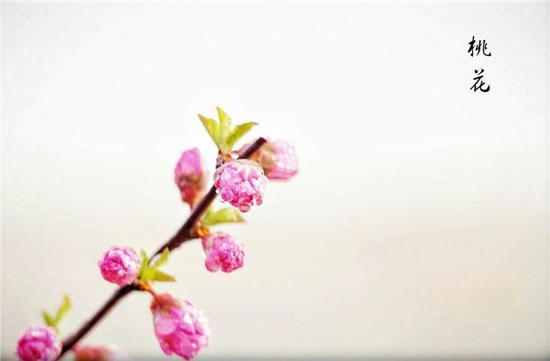 爱上内蒙古 | 走进四月的磴口 不负春光不负韶华