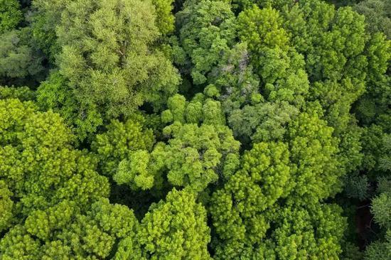 草原圣谷 北方雨林——大青沟