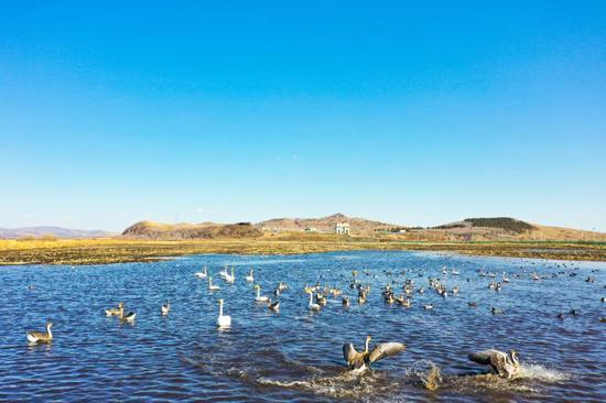 国门下滩涂上出现的各类鸟