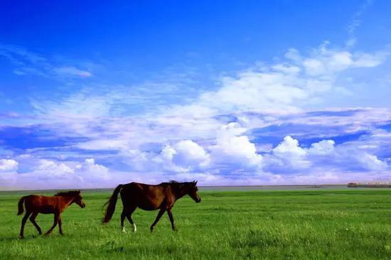 爱上内蒙古 丨 夏天已经来到怎么能错过呼伦贝尔