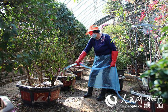3月4日,鄂尔多斯市康巴什区园林局苗圃基地,养护工人刘莲娥正在给温室大棚内的花草浇水,这些花草是夏季康巴什区大街上最美的风景。冯静 摄