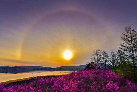 爱上内蒙古 丨 中国最佳山地花卉观赏地 达尔滨湖国家森林公园