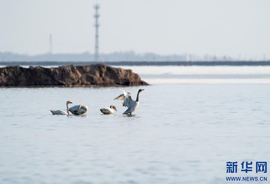 几只候鸟在海流水库嬉戏