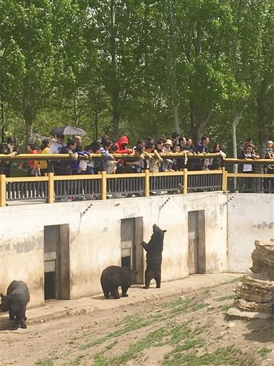 市民在野生动物园私自给黑熊投喂食物