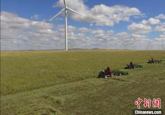 图为罕乌拉牧民服务队正在打草。 周宏波 摄