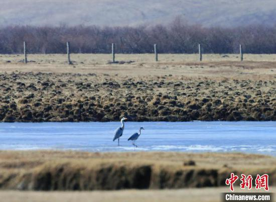 图为北迁候鸟在河面上休憩。 张宏 摄
