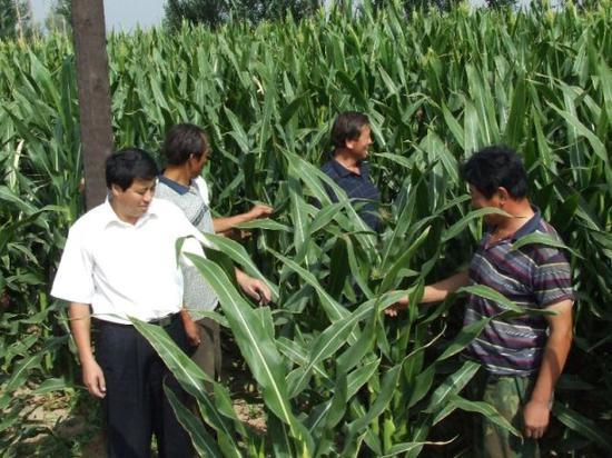 内蒙古农信社信贷员查看农户种植情况