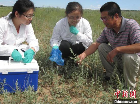 图为天然药用植物调查与样品采集现场。内蒙古农牧业科学院供图