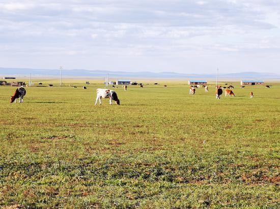 萨如拉塔拉嘎查位于呼伦贝尔草原腹地。