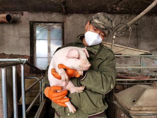 走向我们的小康生活 | 护林员养猪舍里话小康