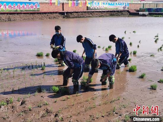 图为科右前旗大坝沟中学同学们正在插秧。 大坝沟中学供图