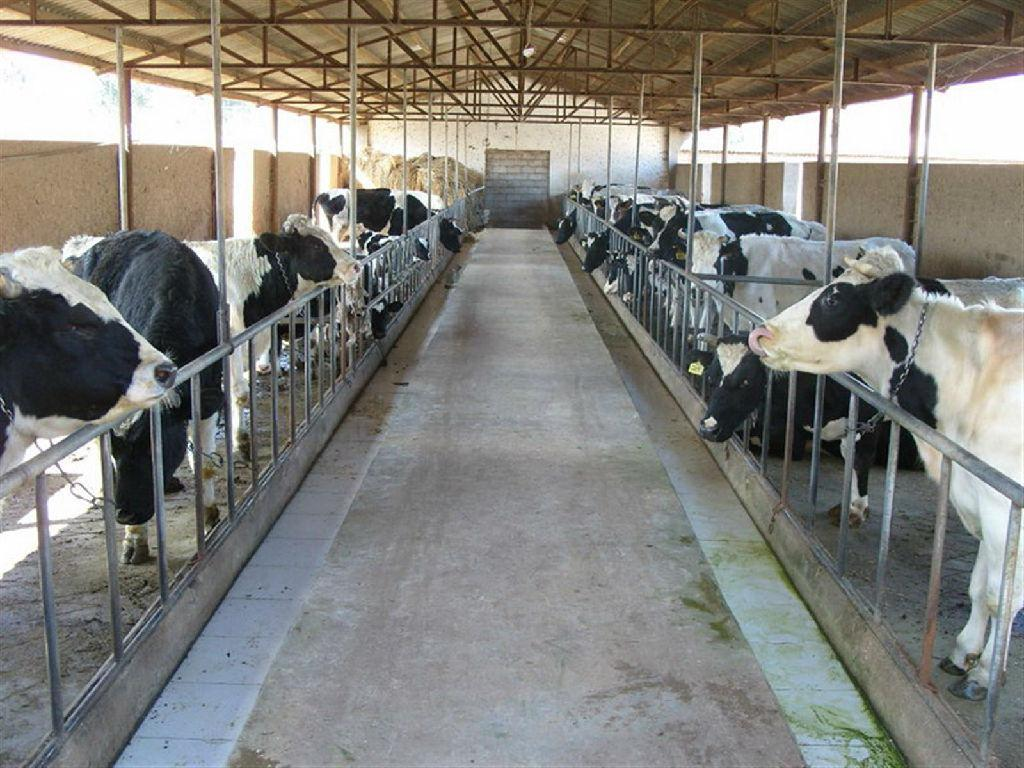 兴安盟科右前旗新丰源奶牛养殖合作社带领村民发展