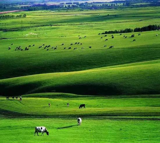 爱上内蒙古 丨 远离城市 感受草原带给你的自由