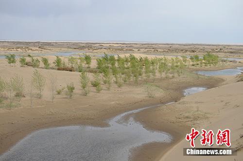 内蒙古自治区鄂尔多斯市库布其沙漠内,当地将黄河凌汛水引入沙漠低洼地形成水面,改善沙漠生态环境,达到减轻防凌压力和治沙的双赢目的。中新社记者 刘文华 摄