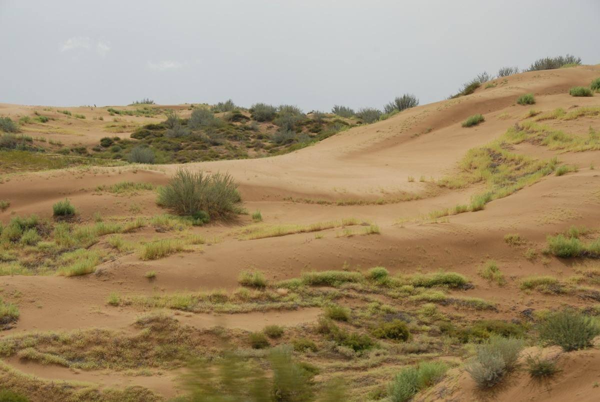 """治沙淘金记:从牧民摇身一变成沙漠中的""""斜杠中年"""""""