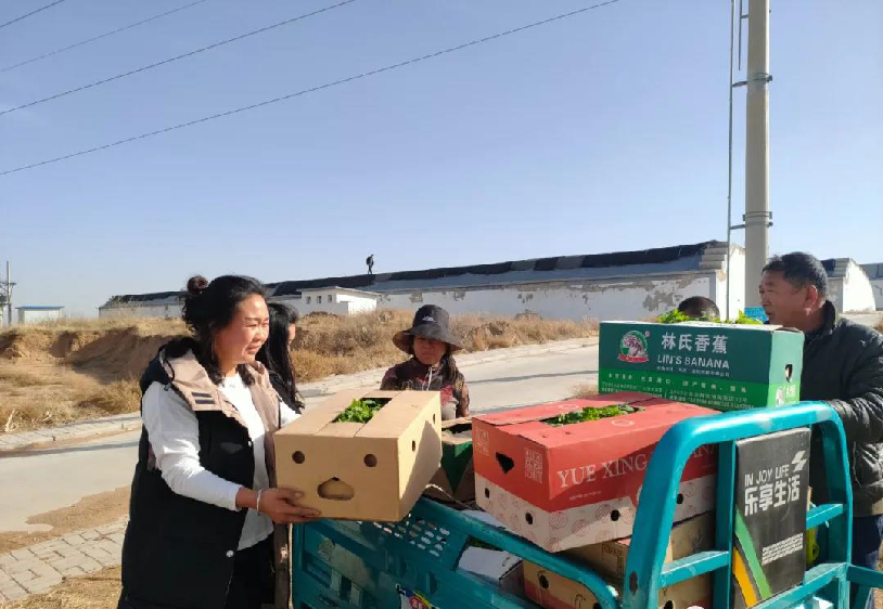 社区居民在搬运蔬菜苗。