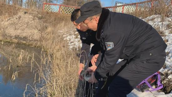 内蒙古乌尔旗汉森林民警救助凤头鸊鷉放归大自然