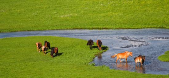 爱上内蒙古 丨 这三分钟锡林郭勒生态美景尽在其中