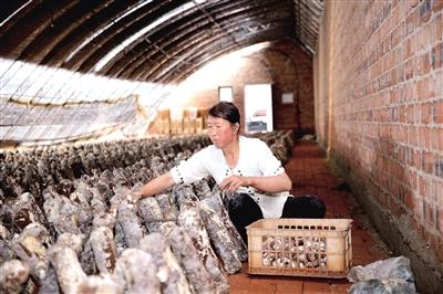 武川县耗赖山乡大豆铺村贫困户郝三换用自己的劳动脱贫。