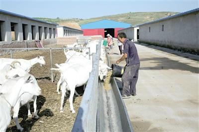 清水河县宏河镇聚宝庄村有贫困户参与的养羊基地。