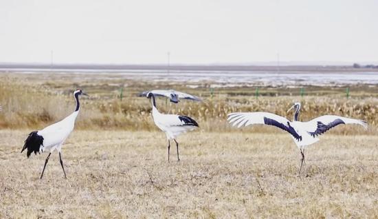 太壮观!图牧吉国家级自然保护区候鸟云集大迁徙~