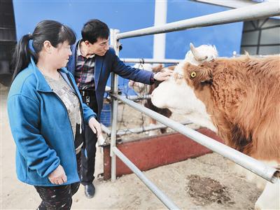 包玉山:赶着牛群奔小康