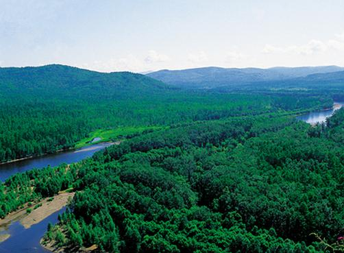 我国最大国有林区已实现林业碳汇交易5笔共191万元
