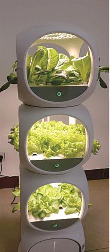 和祺农业新型水培种植技术