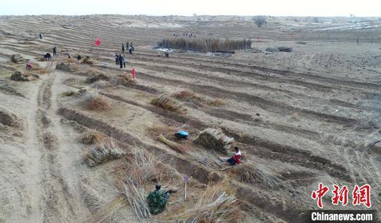 航拍内蒙古自治区通辽市内的科尔沁沙地腹地,民众种植黄柳。(资料图片) 侯显锋 摄