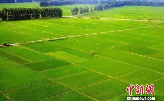 图为兴安盟稻田。兴安盟行政公署供图